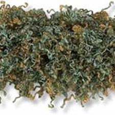 Moss Aqua Trim by Kravet
