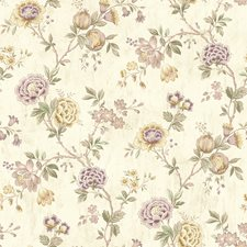 CCB02214 Chrysanthemum  Lilac Jacobean by Brewster